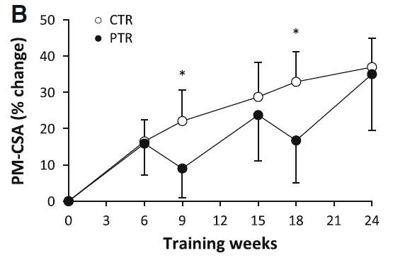 Figuren viser hvordan muskelmassen på brystet udvikler sig over 24 uger både med og uden pause fra træningen.