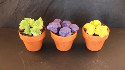 Tre typer blomkål: gul, lilla og romanesco